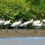birdswatching-guanacaste02