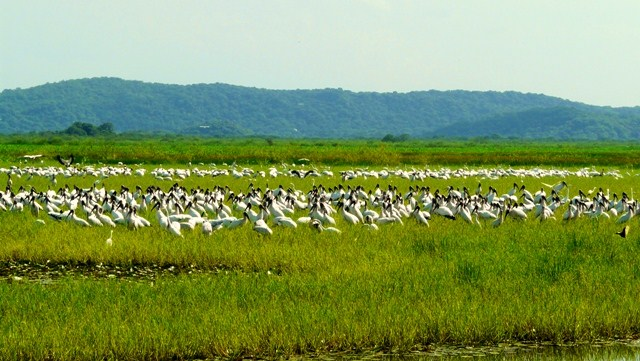 Biodiversity in Costa Rica: Birds!!