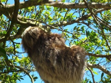 Monteverde Costa Rica, a natural spot