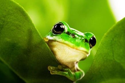Costa Rica's amazing biodiversity found at INBioparque