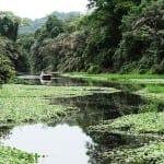 Manatus-Tortuguero-Sustainable-Tourism