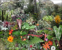 The Visit of a Lifetime — Monteverde