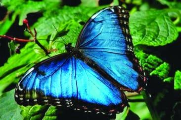 Ecotourism in Costa Rica Defines Veragua Rainforest Park