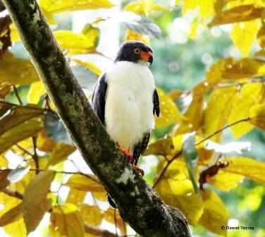 Christmas Bird Count Record Soars in Costa Rica for 2012
