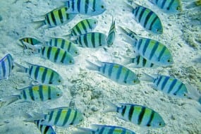 Finding Nemo and other Fish Tales on Manuel Antonio Catamaran Tour
