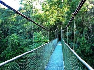 Adventure and Nature Combine the Best of Sarapiqui, Costa Rica
