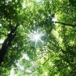 Costa Rica's green space may boost your happiness