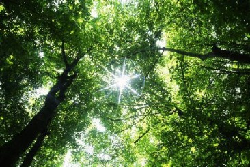 Boost your well-being in Costa Rica's green space