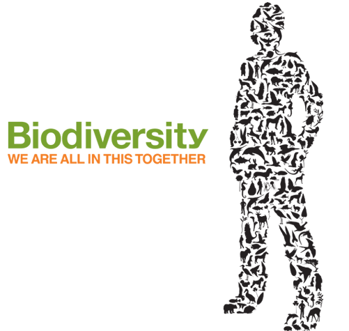 tourism and biodiversity Tourism and biodiversity are closely intertwined millions of people travel each year to experience nature's splendour the income generated by sustainable tourism can provide important support for nature conservation, as well as for economic development.