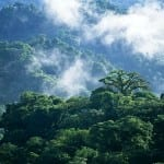 Costa Rica's forests play an important role in reducing the world's carbon footprint