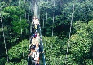 Hanging Bridges Costa Rica. On Monteverde's Sky Walk.