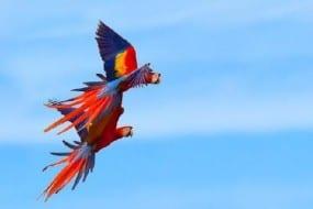 Carara National Park is tropical bird watching paradise