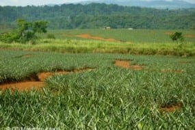 Can agriculture co-exist with rainforest in Costa Rica's Caribbean lowlands?