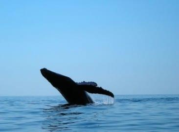 Osa Peninsula marine protected area sought in Costa Rica