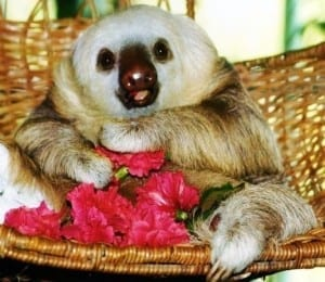 Sloth Sanctuary in Puerto Viejo Costa Rica