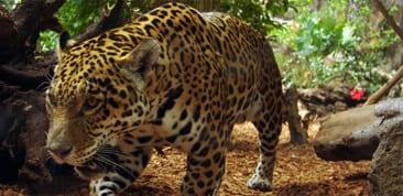 Guided visits at Corcovado National Park