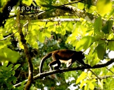 Childhood memory leads to amazing Costa Rica Eco Tour