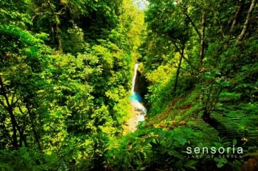 Best Guanacaste tour for visiting the Costa Rica rainforest
