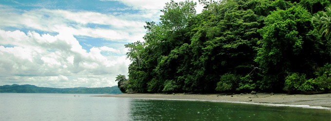 Jaguars and monkeys and whales on Osa Peninsula Costa Rica! Oh my!