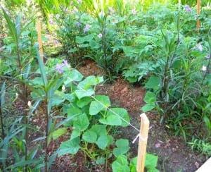 Pranamar biogarden
