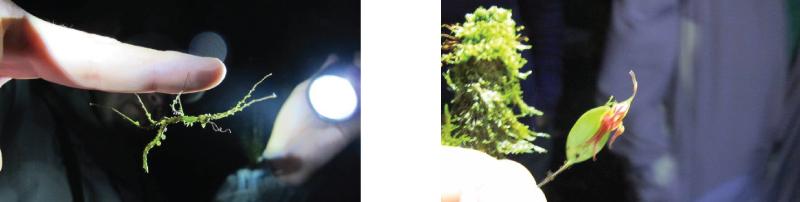 biodiversity-guanacaste-monteverde
