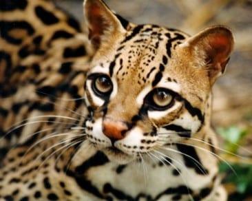 The secret life of a Costa Rica rainforest