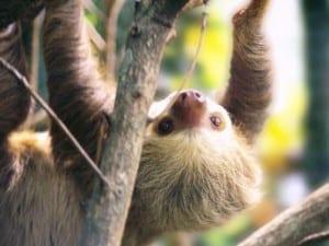 Portasol wildlife - Sloth