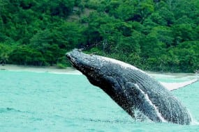 Having a whale of a time in Golfo Dulce, Costa Rica