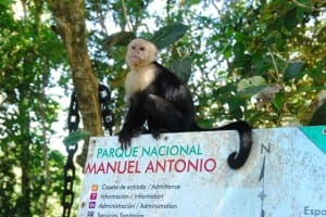 Manuel Antonio National Park monkey