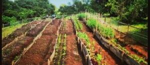Organic farm Hacienda Okhra near Santa Teresa