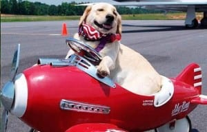 Pets - airline travel for dogs