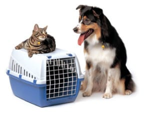 Pets - dog and cat travel