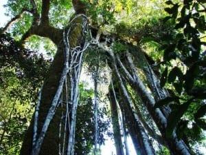 Karen Mogensen Reserve forest