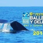 Whale & Dolphin Festival in Costa Rica