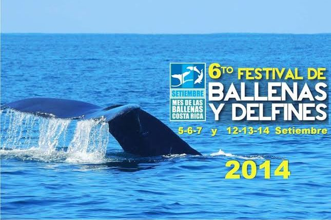 Don't miss the Whale & Dolphin Festival 2014 in Costa Rica!