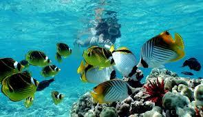 Snorkeling Cahuita National Park