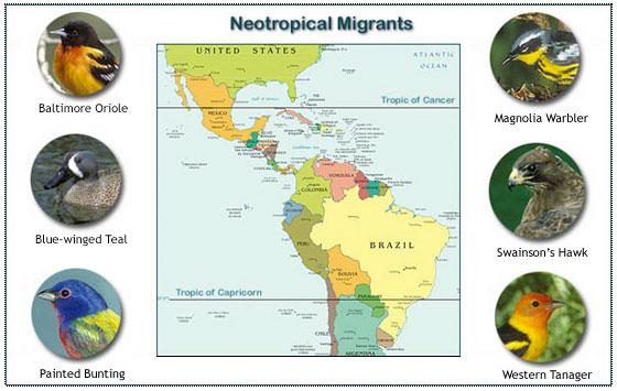 South For The Winter: Costa Rica Bird Migration Season