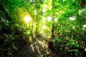 Nicuesa Lodge rainforest Costa Rica