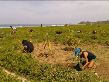 Bringing the trees back to Playa Guiones, Costa Rica