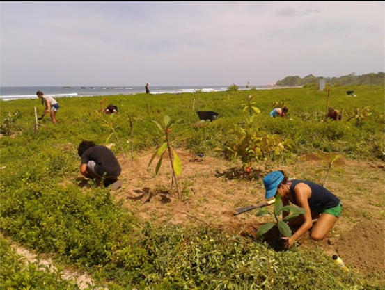 Planting trees on Playa Guiones, image by BarriGuiones Coastal Reforestation Project