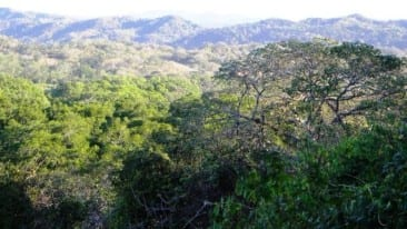 Phoenix rising: How Costa Rica's tropical dry forest was saved