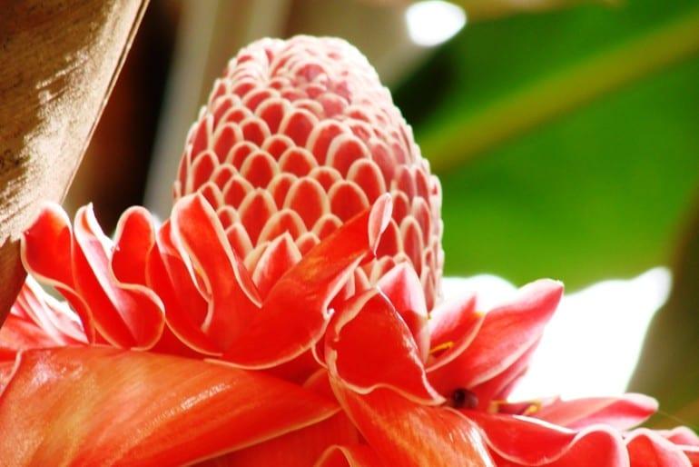 Top place to go in Costa Rica: Else Kientzler Botanic Garden