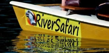 Fun Nosara River Safari Tour is best for wildlife in Nosara Costa Rica