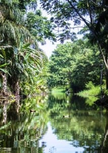 Tortuguero canal by Lirio Lodge