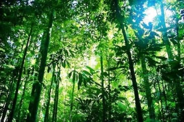 Costa Rica leads world in green economic performance