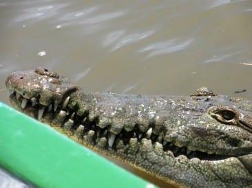 Tour Tamarindo Wildlife Refuge in Guanacaste, Costa Rica