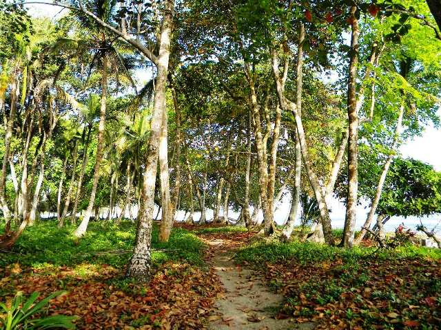 Beach trail by Playa Cocles, Costa Rica Southern Caribbean