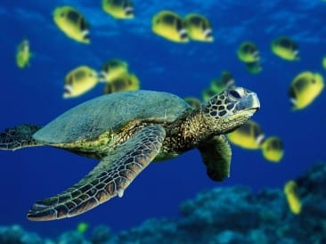 Fantastic sea turtle tours at Lirio Lodge in Caribbean Costa Rica