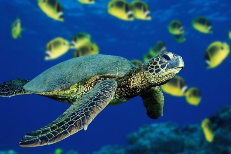 Fantastic sea turtle tours at Lirio Lodge in Caribbean Costa Rica