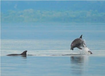 A dolphin tale: See wild dolphins in Golfo Dulce, Costa Rica